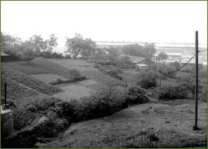 ¿Campas de Galindo. Años 50.  (1)